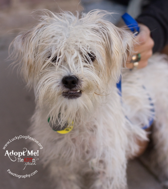 year-old Maltese mix and Neville is a one-year-old purebred Chihuahua ...